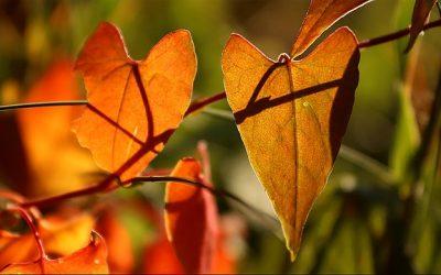 Herfst: tijd van loslaten en bezinnen
